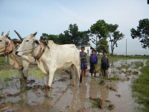 カンボジアの奨学生