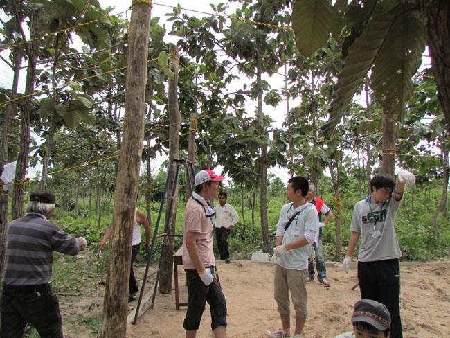 マンゴーの木の植樹
