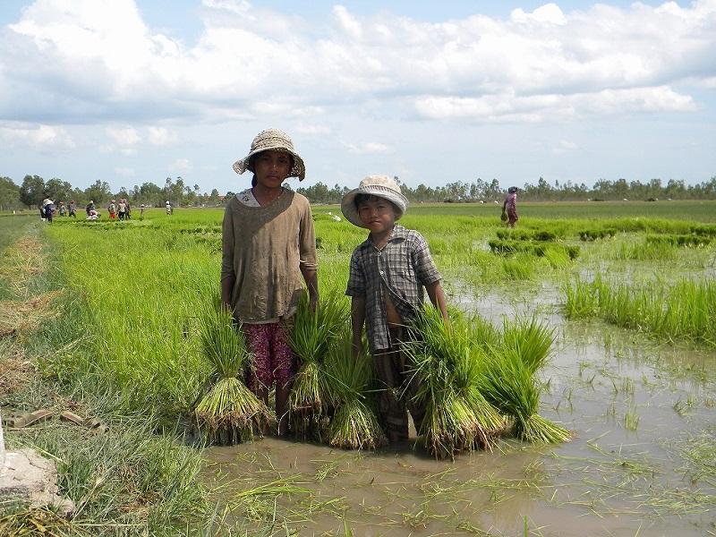 農作業を手伝う子ども